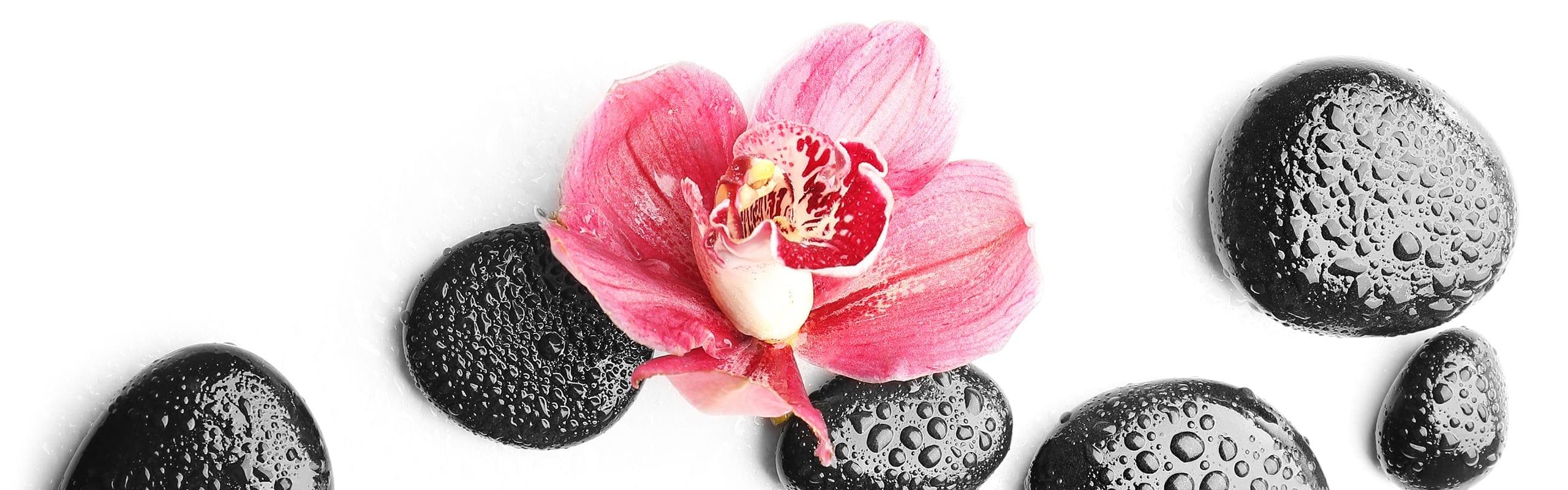 Nasse schwarze Steine mit rosa Blume in der Mitte